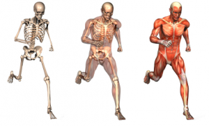 Running Injury Free: Strengthen your core for the demands of the sport
